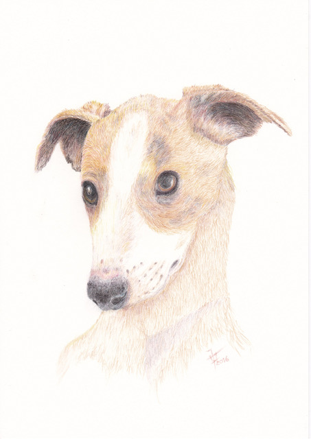 Whippet Puppy2 800